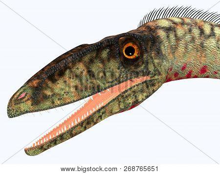 Coelophysis Dinosaur Head 3d Illustration - Coelophysis Was A Carnivorous Theropod Dinosaur That Liv