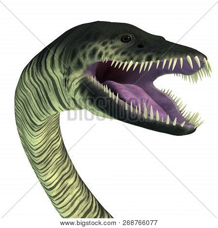 Elasmosaurus Reptile Head 3d Illustration - Elasmosaurus Was A Marine Reptile Plesiosaur That Lived