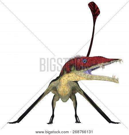 Eudimorphodon Pterosaur On White 3d Illustration - Eudimorphodon Was A Carnivorous Pterosaur Bird Th