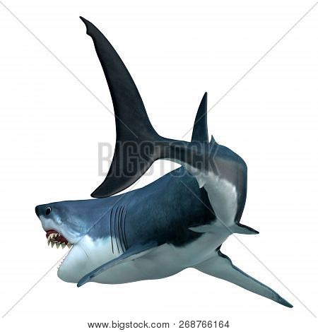 Great White Shark Tail 3d Illustration - The Great White Shark Can Live For 70 Years And Is One Of T