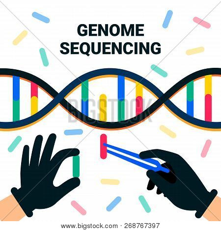 Genome Sequencing Concept. Nanotechnology And Biochemistry Laboratory. The Hands Of A Scientist Work