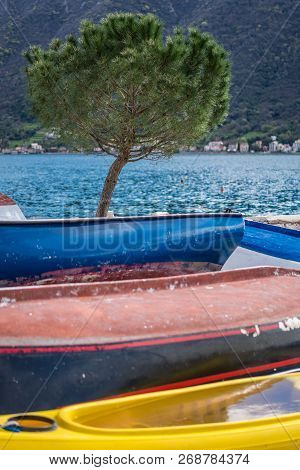 Lonely Tree On The Shore And Colorful Side Decks Of The Small Fishing Boats On The Shore In Perast T