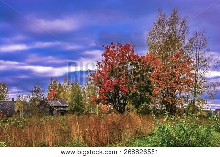 Rustic Autumn Landscape With Bright Red And Yellow Leaves On The Trees.