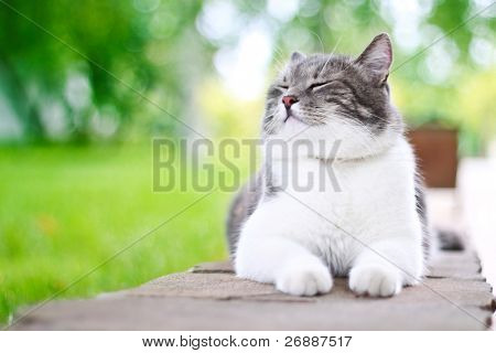 Cute cat enjoying himself outdoors. poster