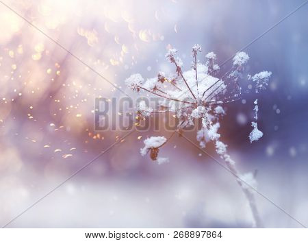Frozen Flower Twig In Beautiful Winter Snowfall Crystals Glitter Background