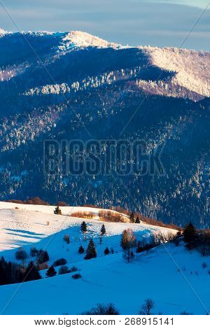 Winter Scenery In Mountains. Forested Hills In Snow. Lovely Cold Weather Background