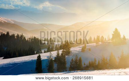 Gorgeous Winter Landscape In Glowing Fog. Marvelous Nature Scenery In Mountains With Spruce Trees On