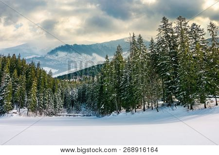 Beautiful Winter Landscape In Mountains. Spruce Forest Around The Snow Covered Meadow On A Cloudy Da