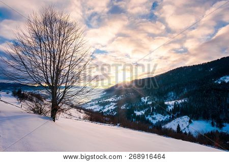 Leafless Lonely Tree On A Snowy Slope At Sunrise. Wonderful Winter Scenery Of Carpathian Countryside