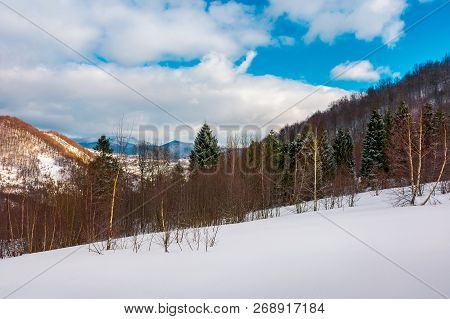 Forest On The Snowy Slope. Lovely Landscape In Mountains On A Cloudy Winter Evening