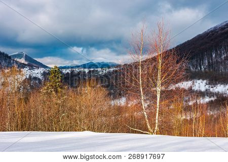Dramatic Winter Landscape In Mountains. Leafless Birch Forest On A Snowy Slope In Sun Light. Distant