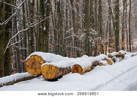 Wooden Logs In Snow By The Road Through Forest. Natural Fuel Or Ecology Disaster Concept