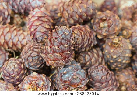 Background Of Siberian Cedar Cones. Horizontal Format Photography. Natural Fon.