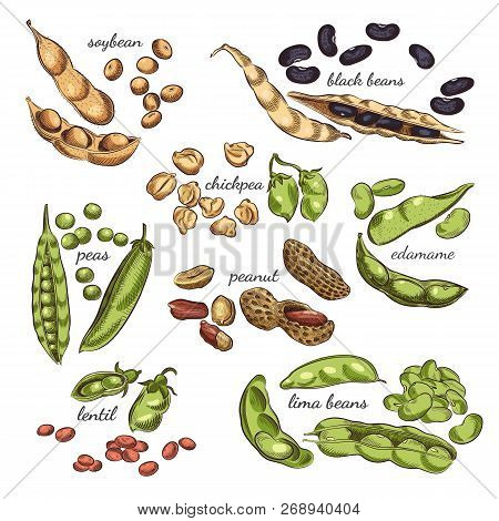 Legumes Hand Drawn Illustration. Nuts, Peas, Beans, Pods And Shells Sketches Isolated On White Backg