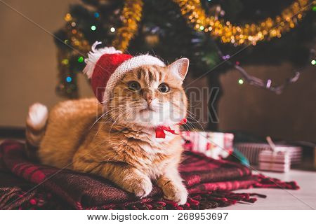 Red Cat Wears Santas Hat Under Christmas Tree. Christmas And New Year Concept