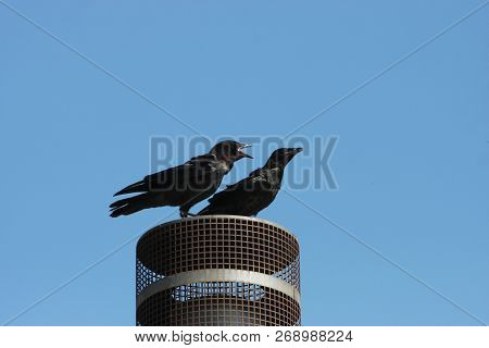 This Is An Image Of Two Birds On Top Of A Chimney Cover Protecting Their Resting Place In Carmel, Ca