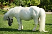 an image of a single white pony poster