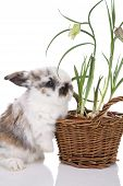 Cute little bunny with spring flowers in a little basket poster