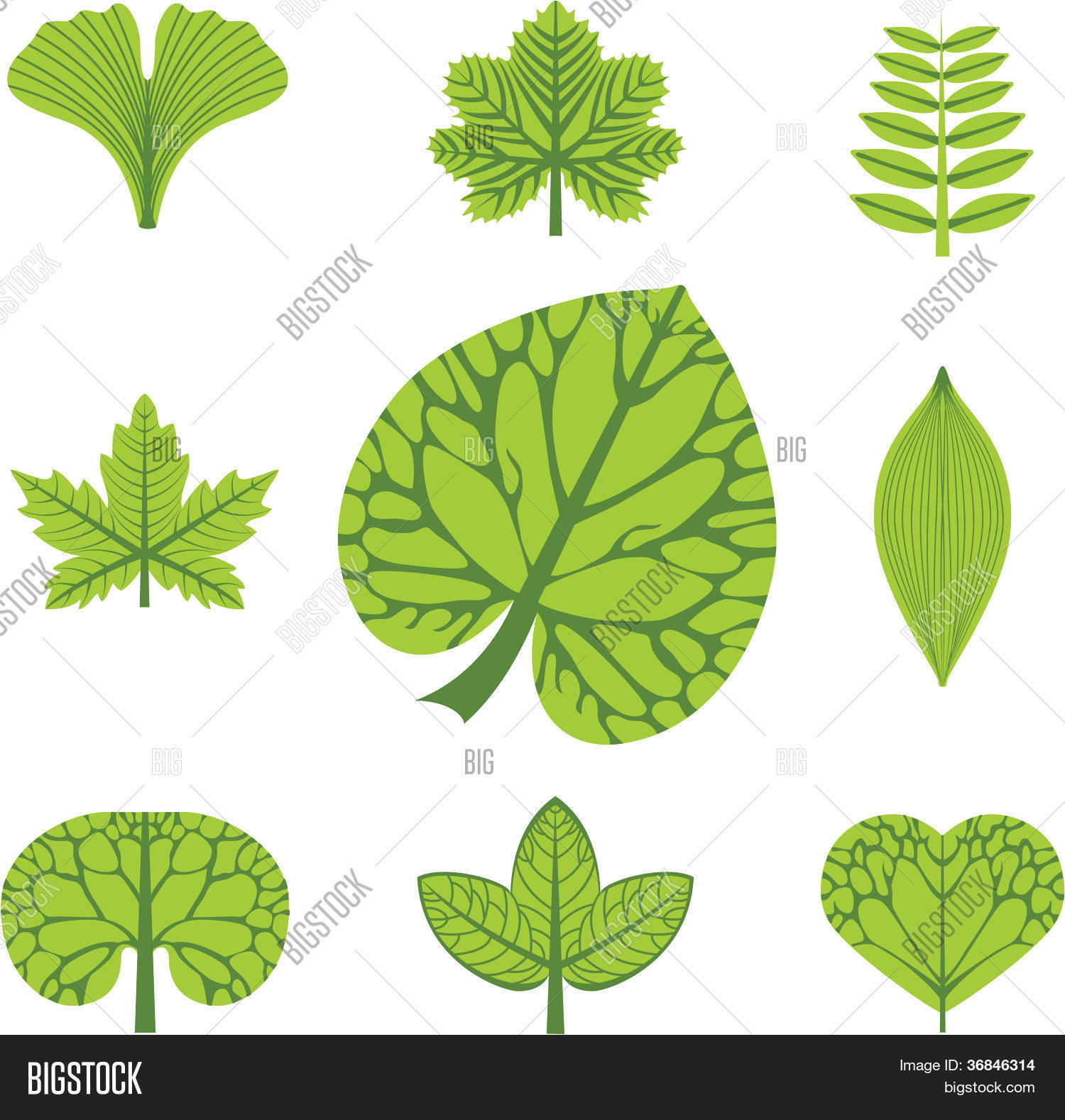 Lilies Types Of Leafs: Different Types Leaves, Vector Vector & Photo