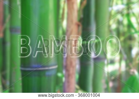 Bamboo Green Forest, Bamboo Stem Close Up With A Sign Bamboo, Asian Nature Concept.