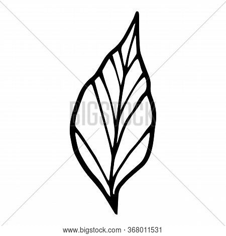 Spa Plant Leaf Icon. Hand Drawn Illustration Of Spa Plant Leaf Vector Icon For Web Design