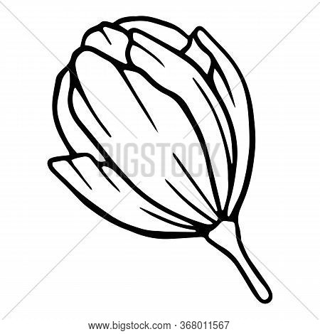 Ceremony Blossom Peony Flower Icon. Hand Drawn Illustration Of Ceremony Blossom Peony Flower Vector