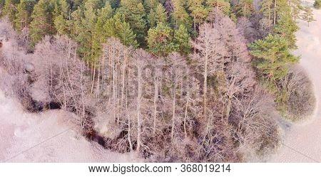 aerial view of brook between spring trees