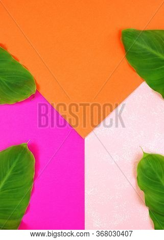 Color Blocking Flat Lay With Leaves On Orange, Pale And Bright Pink Background.
