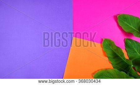 Color Blocking Flat Lay With Leaves On Orange, Pink And Purple Background.