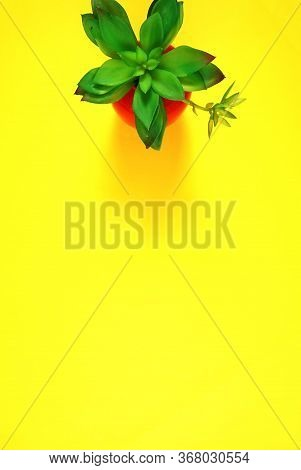 Colorful Flat Lay With Stylish Potted Succulent On Yellow Background