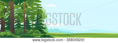 Woodland Edge Of Wild Forest With Big Green Spruce Trees And Oak Trees In Front View, Tourist Route