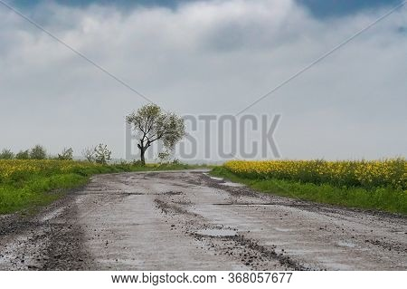 Yellow Field Of Flowering Rape And Tree Against A Mountains With Sky.