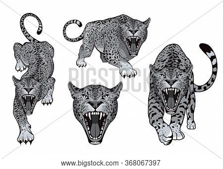 Set Of Angry, Leopard. Predator Animal. Leopard Color Logo. Animal Tattoo. Leopard Stands In Differe