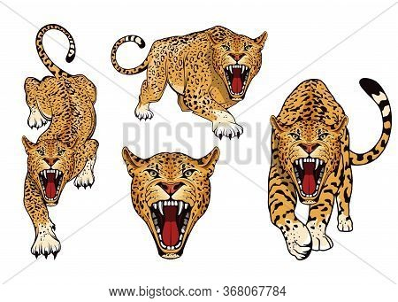 Leopard Logo Set. Angry, Leopard. Predator Animal. Tameless Color Logo. Leopard Stands In Different