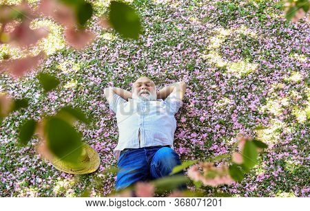 United With Nature. Good Mood. Happy Old Age. Mental Health. Happy Man Under Sakura Tree Looking Upw