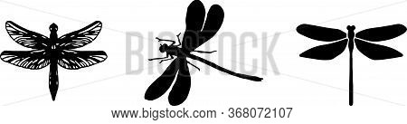 Dragonfly Icon Isolated On Background , Predator, Sign, Symbol