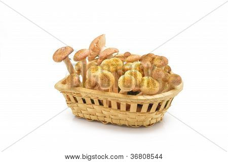 Mushrooms(Armillaria mellea)