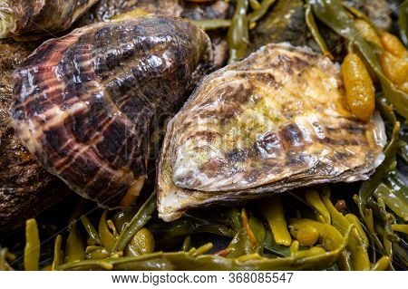Fresh Pacific Or Japanese Oysters Molluscs On Stone With Kelp Seaweed Background Close Up