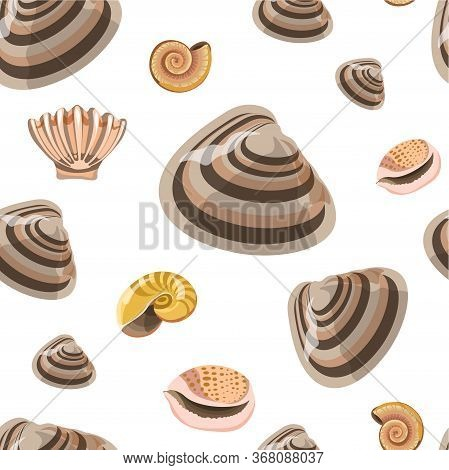 Marine Conches And Shells, Sealife Seamless Pattern Vector