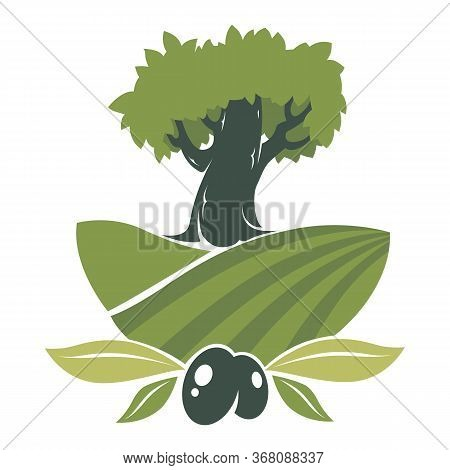 Olives Plantation Label, Tree On Field With Foliage