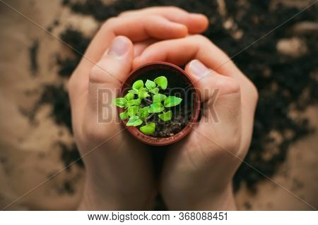A Man Is Holding A Small Pot In Which He Has Just Planted A Young Green Plant Sprout. Plant Growing.