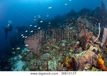 Caribbean Reef Scene With Divers