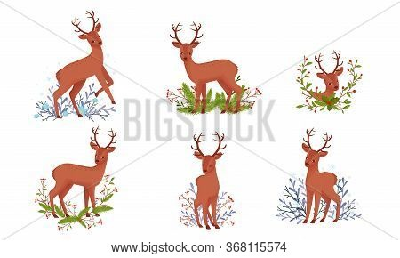 Cute Deer With Antlers In Standing Pose With Winter Flora Beneath It Vector Set