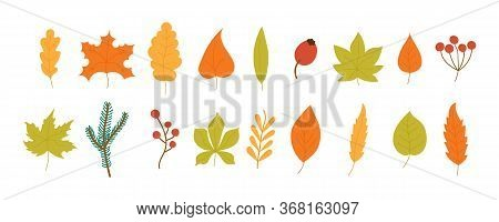 Set Of Colorful Autumn Leaves And Berries Isolated On White Background. Yellow Autumnal Garden Leaf,