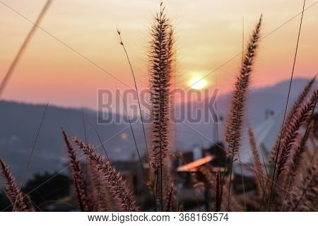 Art Abstract Spring Sunset View Background Or Summer Background With Wild Grass
