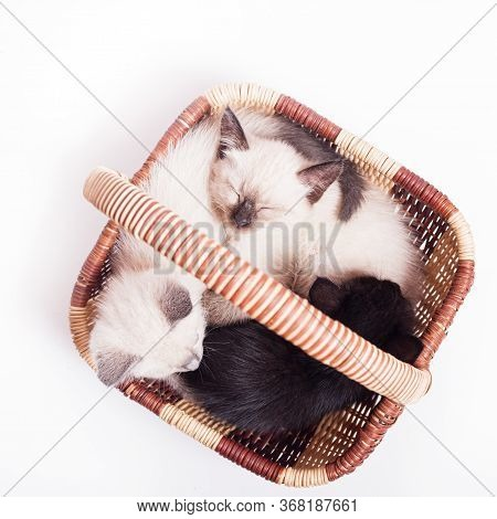 Three Little Kittens In A Wicker Basket On A White Background