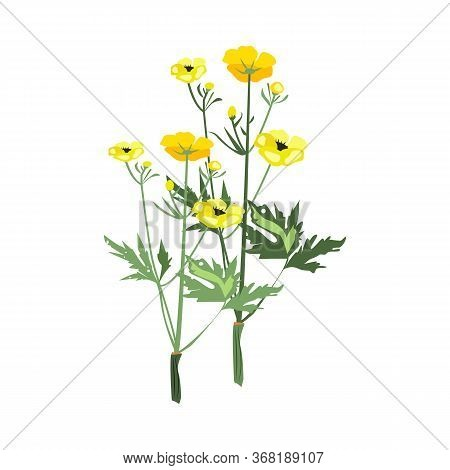Yellow Flowers Illustration. Flower, Plant, Nature. Spring Concept. Illustration Can Be Used For Top