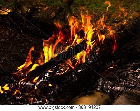 The Yellow-red Flame Dancing Over A Bonfire In The Forest. Cozy Bonfire Made Of Dry Branches In The