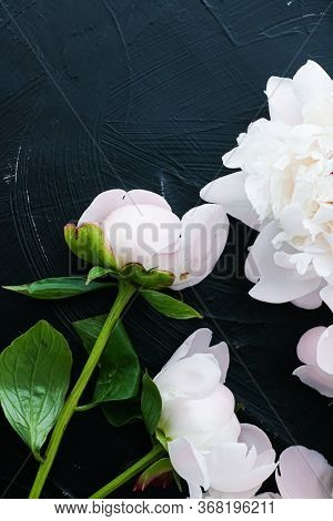 Blooming Peony Flowers As Floral Art Background, Botanical Flatlay And Luxury Branding Design