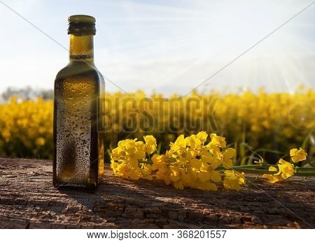 Fresh Rapeseed Oil In A Bottle -natural Medicine. Bottle Of Rapeseed Oil (canola) And Rape Flowers B